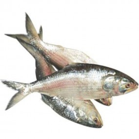 ইলিশ মাছ ছোট 650gm-800gm (50gm±) (Hilsha Fish Small)